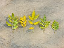 Yellow branches. With leaves on the sand Stock Photo