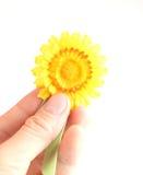 Yellow breast-pin/brooch Royalty Free Stock Photo
