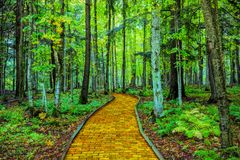 Yellow brick road through forest