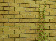 Yellow Brick Wall Stock Image