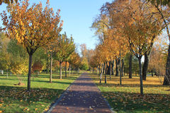 Yellow bright autumn park Royalty Free Stock Photo