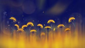 Yellow bright dandelions on a blue background. Spring summer creative background. Artistic image in backlight. Yellow bright dandelions on a blue background stock image