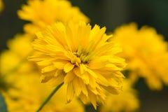 Yellow bright flower Stock Photo