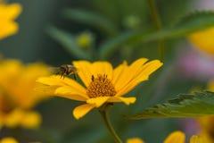 Yellow bright flower Stock Photos