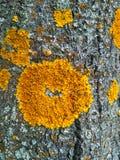 Yellow Moss Texture stock photos