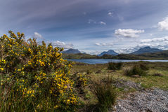 Yellow broom and Loch Buine Moire, Scotland. Stock Images
