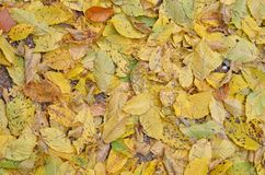 Yellow-brown упаденные листья Стоковая Фотография RF