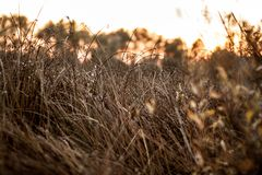 Yellow-brown autumn grass close-up at sunset near the forest stock photos