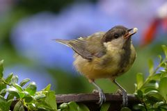 Yellow Brown Bird Perch on Tree Royalty Free Stock Photo