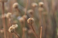 Yellow brown flower in romantic landscape Royalty Free Stock Photography