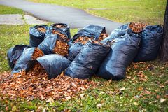 Yellow and brown foliage is collected in several black plastic g stock image