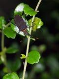 Yellow brown large bug, tropical beetles with yellow orange dots Stock Photos