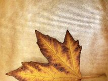 Autumn leaf maple. Yellow-brown leaf of a maple on a gold background royalty free stock photography