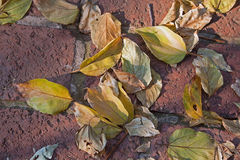 YELLOW AND BROWN LEAVES ON PAVING. Yellow and brown dry autumn leaves Stock Photo