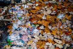 Yellow and brown leaves sank into pond. Wet leaves of maple and oak trees are swimming in lake of Tiergarten park in Berlin. Picturesque view in autumn colors stock image