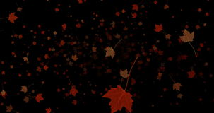 Yellow, brown, red colorful leaves autumn colors flying on black background stock footage