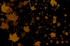 Yellow, brown, red colorful leaves autumn colors flying on black background,  leaf fall season Stock Photography