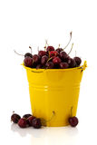 Yellow bucket cherries Stock Photography