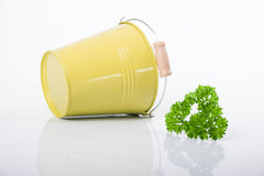 Yellow bucket with parsley and dill isolated on Royalty Free Stock Photos