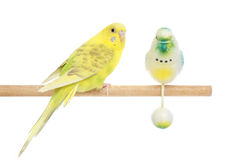 Yellow budgie on a stick Stock Photos