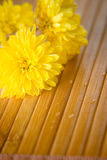 Yellow buds on bamboo. Bouquet of yellow flowers with raindrops on bamboo stock photos