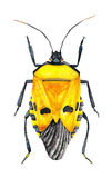Yellow Bug Stock Photo