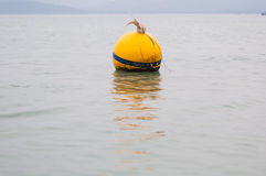 Yellow Buoy floats Stock Image