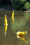 Yellow buoys on river Dee, Chester. Royalty Free Stock Image