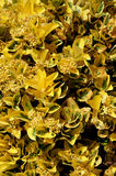 Yellow Bush Background Stock Images