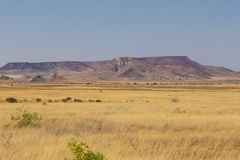 Yellow bush desert landscape in Madagascar Royalty Free Stock Photos