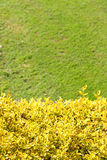 Yellow bush and grass Royalty Free Stock Photo