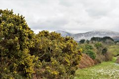 Spring in Mourne Mountains Stock Images