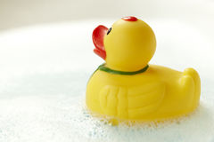 Yellow business rubber duck Stock Photo