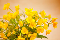Yellow buttercup flowers Stock Photo