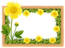 Yellow buttercup flowers as frame design Royalty Free Stock Photos