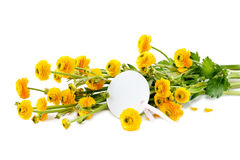 Yellow buttercup flowers on white background Royalty Free Stock Photo
