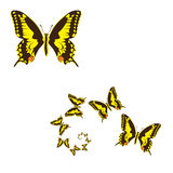 Yellow butterflies Stock Images