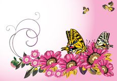Yellow butterflies and pink flowers Royalty Free Stock Images