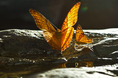 Yellow butterfly. On ten rock royalty free stock photography