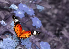 Yellow Butterfly. Butterfly on cold color background Royalty Free Stock Photography