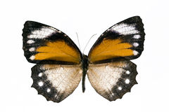 Free Yellow Butterfly Stock Photo - 3658200