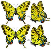 Yellow butterfly Royalty Free Stock Image