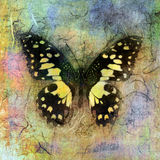 Yellow Butterfly. Mixed medium illustration of a butterfly Stock Image