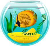 Yellow butterfly fish in an aquarium Royalty Free Stock Image