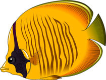 Yellow butterfly fish Royalty Free Stock Photos