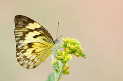 Yellow butterfly and flower Stock Photography