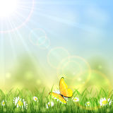 Yellow butterfly and flower Stock Images