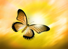Yellow Butterfly Flying. A yellow butterfly flying through a yellow sky stock images