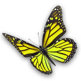 Yellow butterfly flying Stock Photos