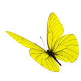 Yellow butterfly flying Royalty Free Stock Photography
